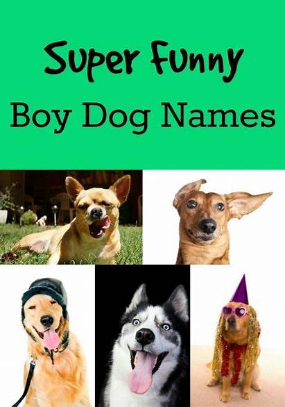 Names Dog Funny Dogs Male Hilarious Unique