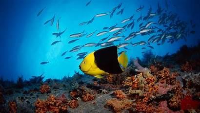 Widescreen Wallpapers Desktop Wide Nature Underwater