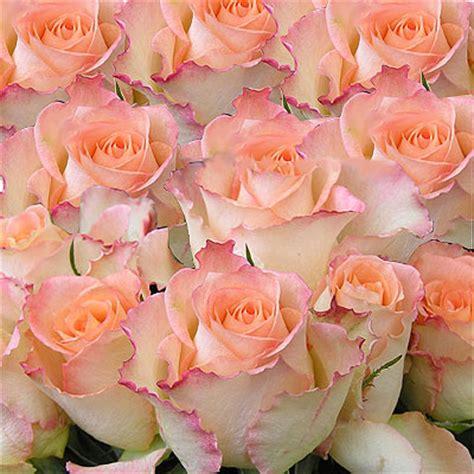 immagine fiore rosa inviare mazzo rosa fascio di