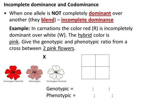 Codominance And Incomplete Dominance Worksheet Worksheets For All  Download And Share
