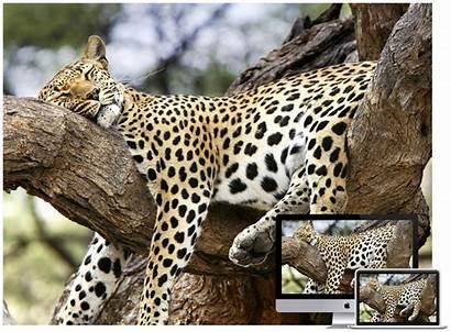 Animal Wildlife Wallpapers Amazing Hongkiat Sleeping