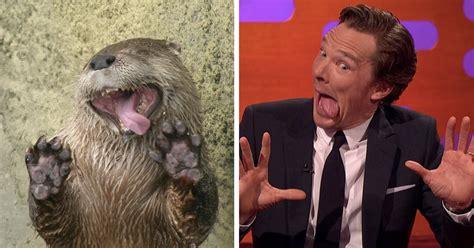 Benedict Cumberbatch Otter Meme - rumors confirmed benedict cumberbatch is an otter 10 pics bored panda