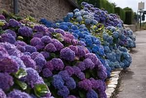 Blaudünger Für Hortensien : 33 blumensorten f r den bauerngarten freshouse ~ Michelbontemps.com Haus und Dekorationen