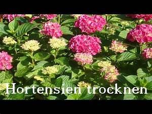 Rosen Aus Seidenpapier : diy deko rosen aus stoff im shabby chic stil deko ~ Lizthompson.info Haus und Dekorationen