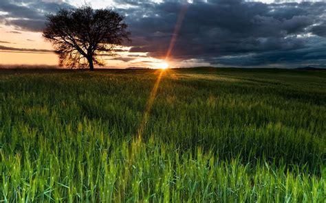 nice sunset view green grass  wallpapers hd wallpapers