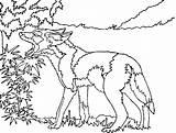 Coyote Coloring Coyotes Howling Printable Drawing Template Head Runner Road Wiley Phoenix Spurs Getdrawings 630px 71kb sketch template
