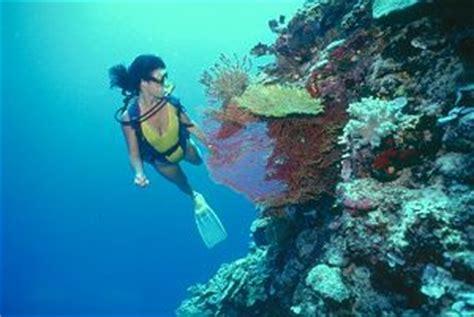 diving  bermuda travelassist magazine