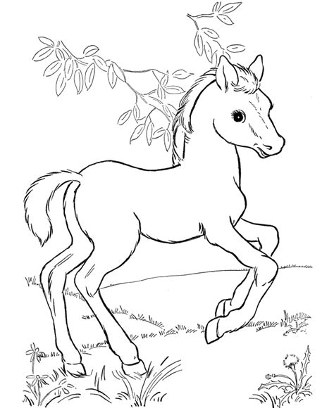 Coloring Horses Pages by Coloring Pages For Coloring Pages For