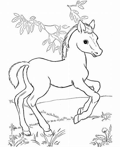 Coloring Pages Horse Horses Colouring Printable Foal