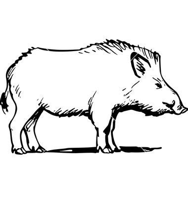 wild boar vector boar   wild boar animal