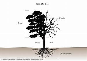 Crown Tree Trunk Diagram