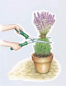 Lavendel Wann Schneiden : ber ideen zu lavendel pflanzen auf pinterest ~ Lizthompson.info Haus und Dekorationen