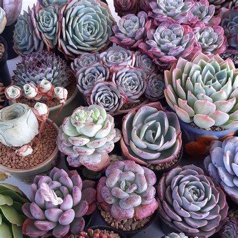 Succulent Care แหล่งการเรียนรู้ ไม้อวบน้ำไทย - การผสมดิน ...