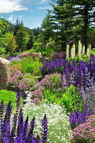 Colorado Perennial Flower Gardens