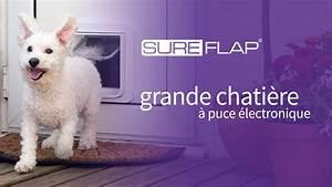 Puce De Chien : publicit de la grande chati re puce lectronique ~ Melissatoandfro.com Idées de Décoration