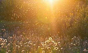 Eliminer Les Moucherons : invasion de mouches dans la maison pourquoi ventana blog ~ Nature-et-papiers.com Idées de Décoration