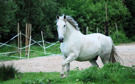 horse horses hd wallpapers 4k widescreen wallpaperplay