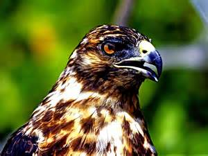 Jungle Animals Birds