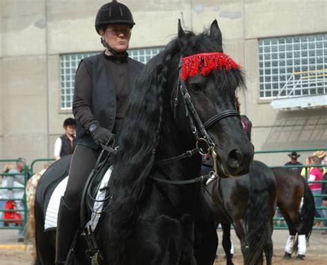 Friesian Heritage Horse At Minnesota Horse Expo 2010