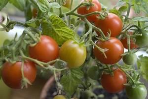 Tomaten Im Hochbeet : die erntefrische wunderwelt der hochbeete ~ Whattoseeinmadrid.com Haus und Dekorationen