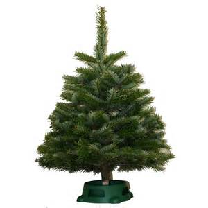 shop 2 3 ft fresh cut noble fir tabletop christmas tree at lowes com