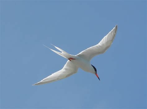 Where Small Is Significant—saving The Bvi's Seabirds One