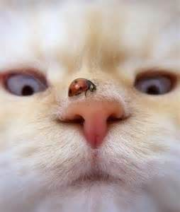 cat nose lovely pic of a ladybug in a cat nose funniest pictures