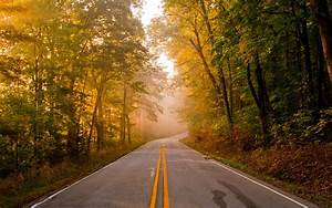 Roads, Trees, Forest, Autumn, Fall, Wallpapers, Hd, Desktop