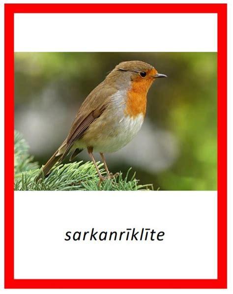 Komplekts - Dārza + meža putni - Dzīvnieku pasaule ...
