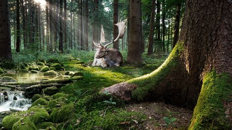 Forest With Animals Wallpaper - nature trees forest moss animals deer sun rays