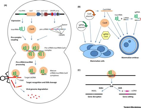 origin  crispr cas technology  prokaryotes