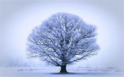 Tree Oak Winter Wallpapers Trees Gorgeous 4k