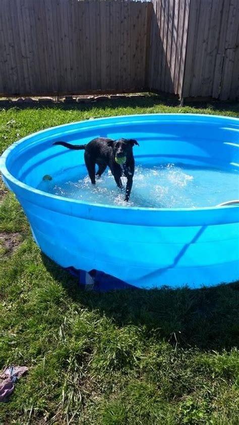 My Dog Loves His New Pool  Backyard Ideas Pinterest
