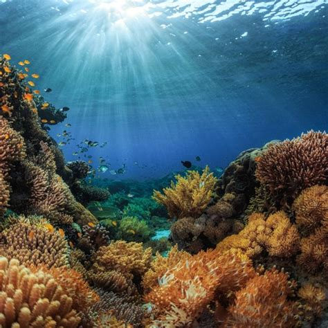 coral reefs  texas usa today