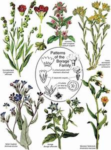 Botany In A Day  Apg   The Patterns Method Of Plant