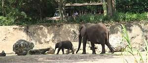Caring for Giants Tour at Disney's Animal Kingdom ...