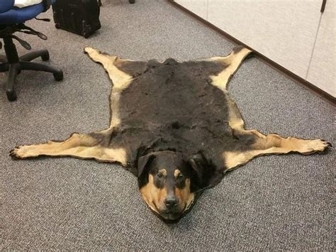 rugs for dogs someone has turned their dead family into a rug and is
