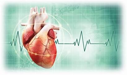 Heart Risk Assessment Cardiovascular Cardiologist Doctor Disease