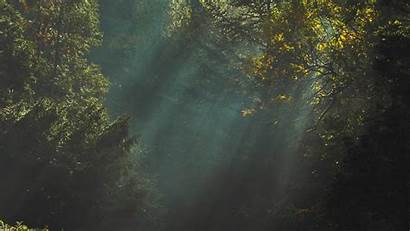 Dark Nature Mac Tree Trees Desktop Wallpapers