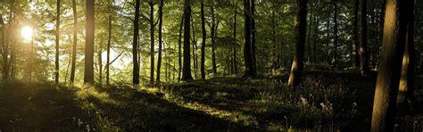 fonds decran lever du soleil bois sauvages lherbe les