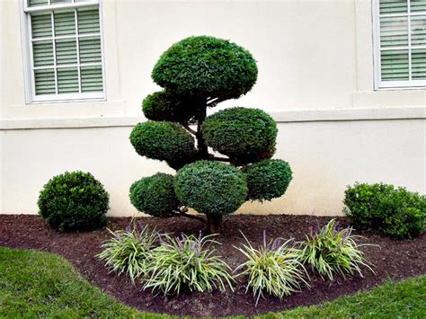 how to shape shrubs top 28 how to shape shrubs how to prune trees and shrubs images frompo what shape will you