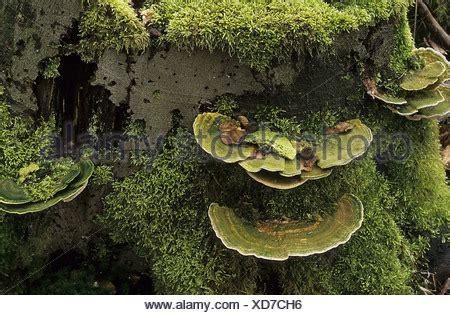 Im Garten Wuchs Der Baum stub moose baum schw 228 mme baumbewuchs stamm wuchs im laufe