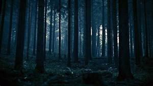 DARK FOREST - Dark Ambient Creepy Horror Windy Stalker ...