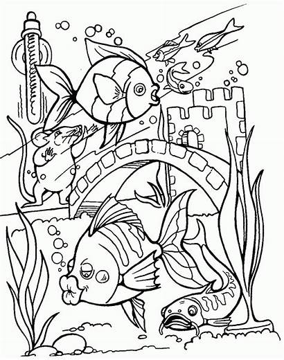 Coloring Fish Pages Tropical Realistic Sheets Tank