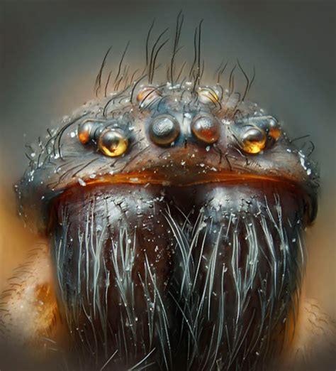 microscopic   insects    squirm