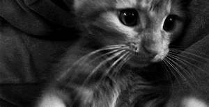 black and white kitten gif | WiffleGif