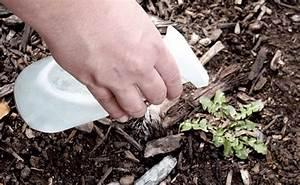 Comment Enlever Les Mauvaises Herbes : 10 utilisations tonnantes du vinaigre blanc dans le jardin ~ Melissatoandfro.com Idées de Décoration