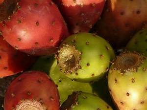 省 Basic Calories In Prickly Pear