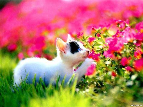 Cute Cat In Garden Flower Wallpaper