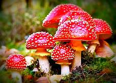 Oregon close to becoming first State to legalize magic mushrooms…